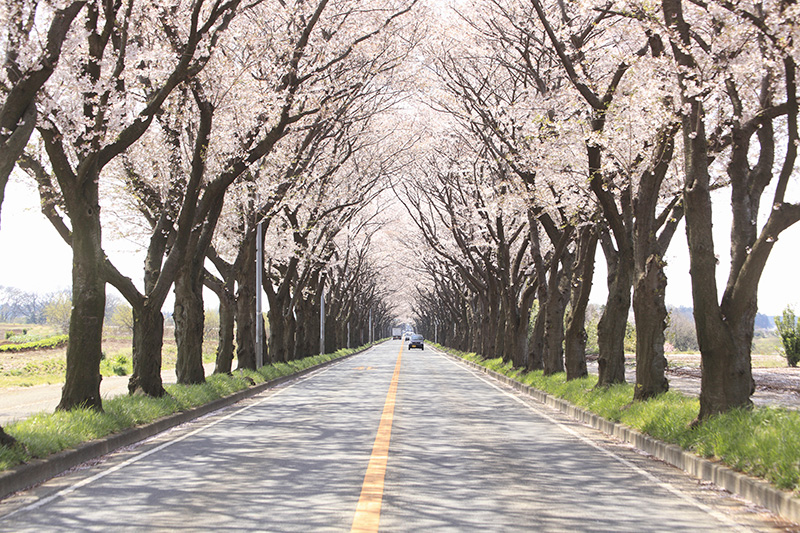 センターラインのある道路のイメージ画像