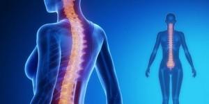 交通事故のむちうちの脊髄を表現したイメージ画像